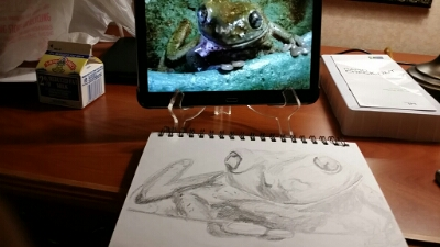 wpid 20150202 211930 A Little Frog Sketching